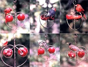 feeder-apple