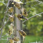 feeder-thistle